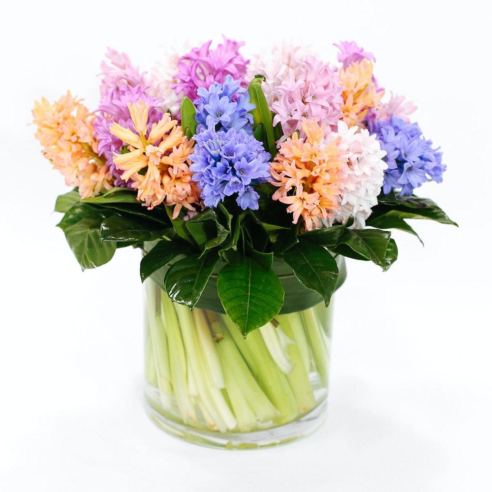 Hyacinth Rainbow