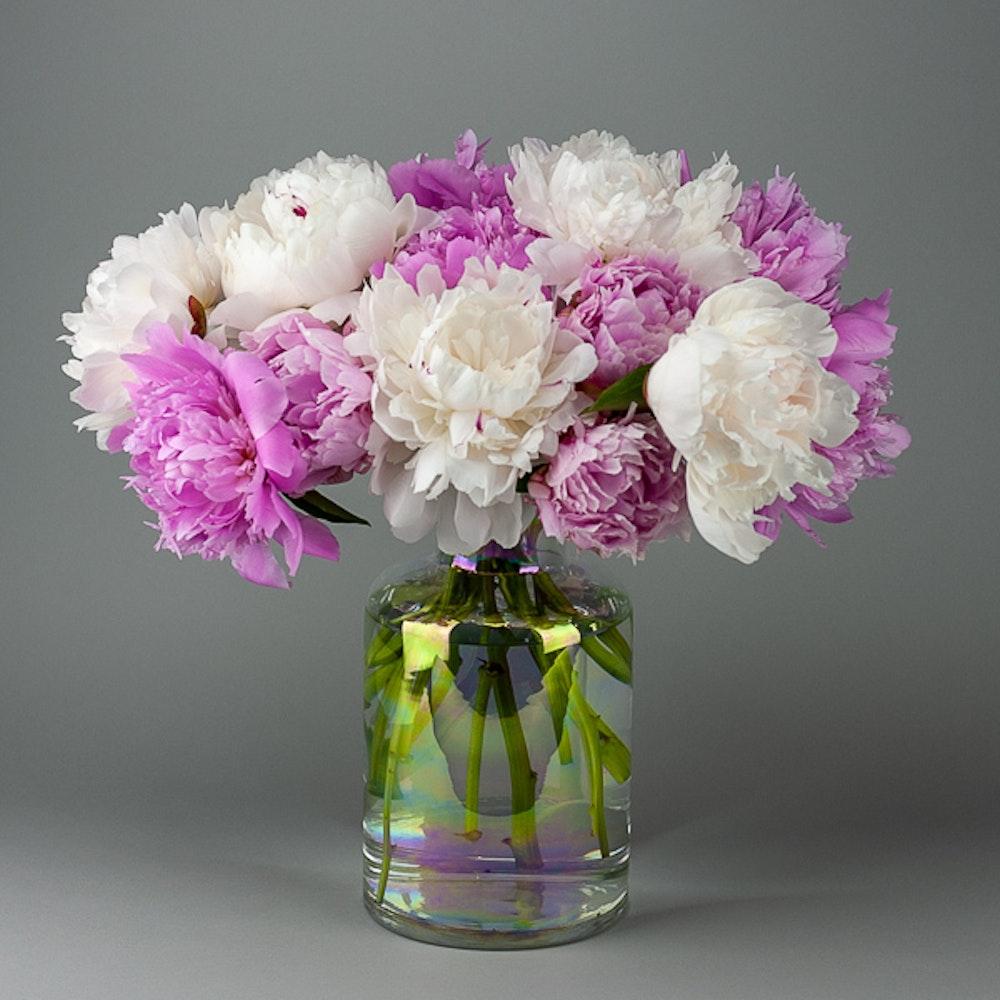 Peony Blooms