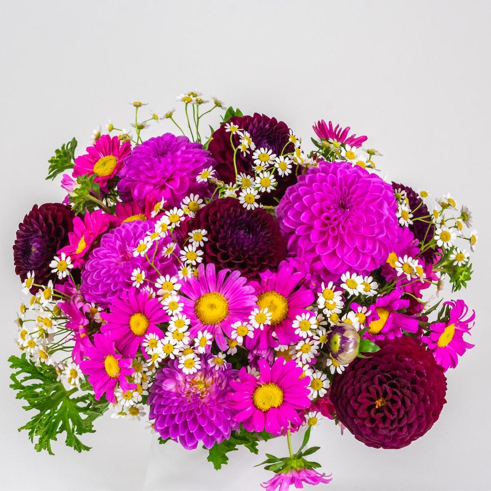 Merveille Florale