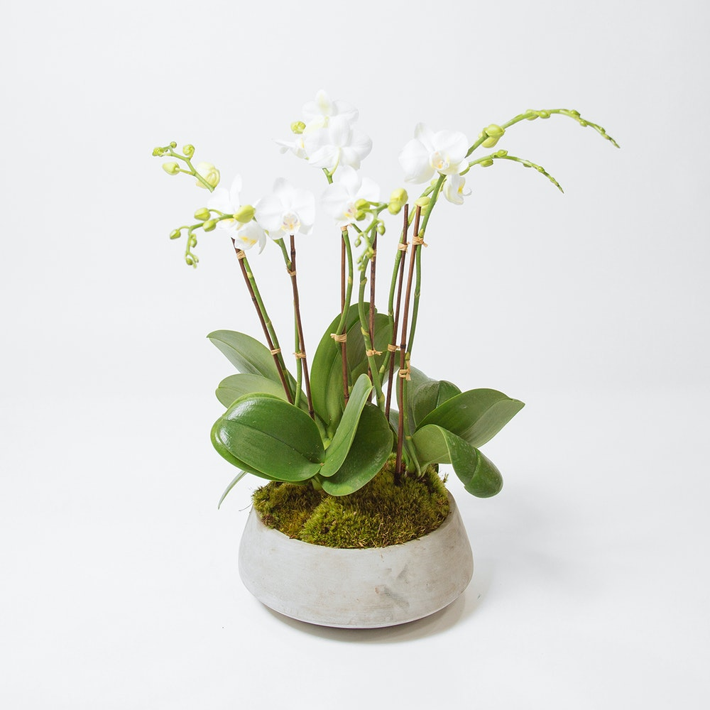 Tranquility Orchids