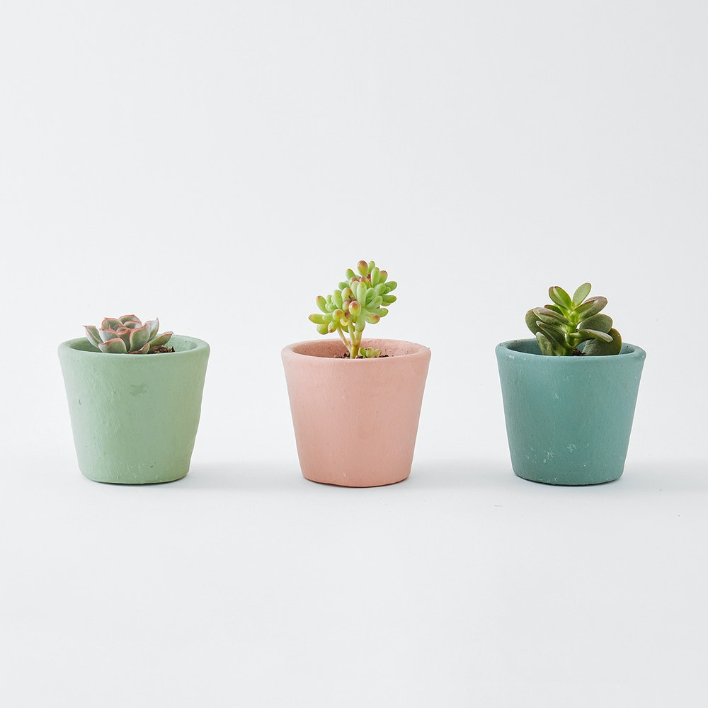 3 Potted Succulents