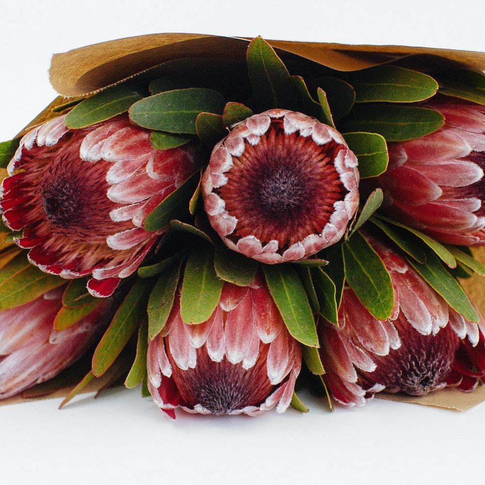 Exotic Protea Bunch