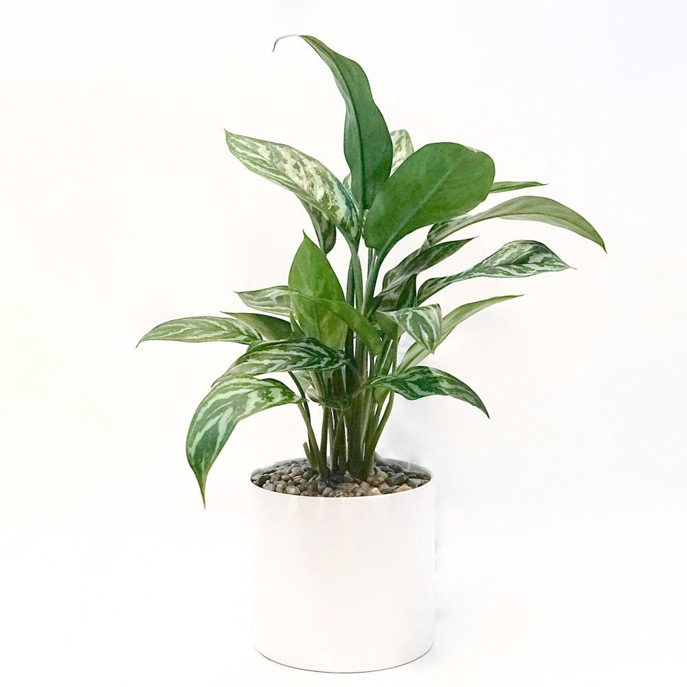 Silver Bay Plant