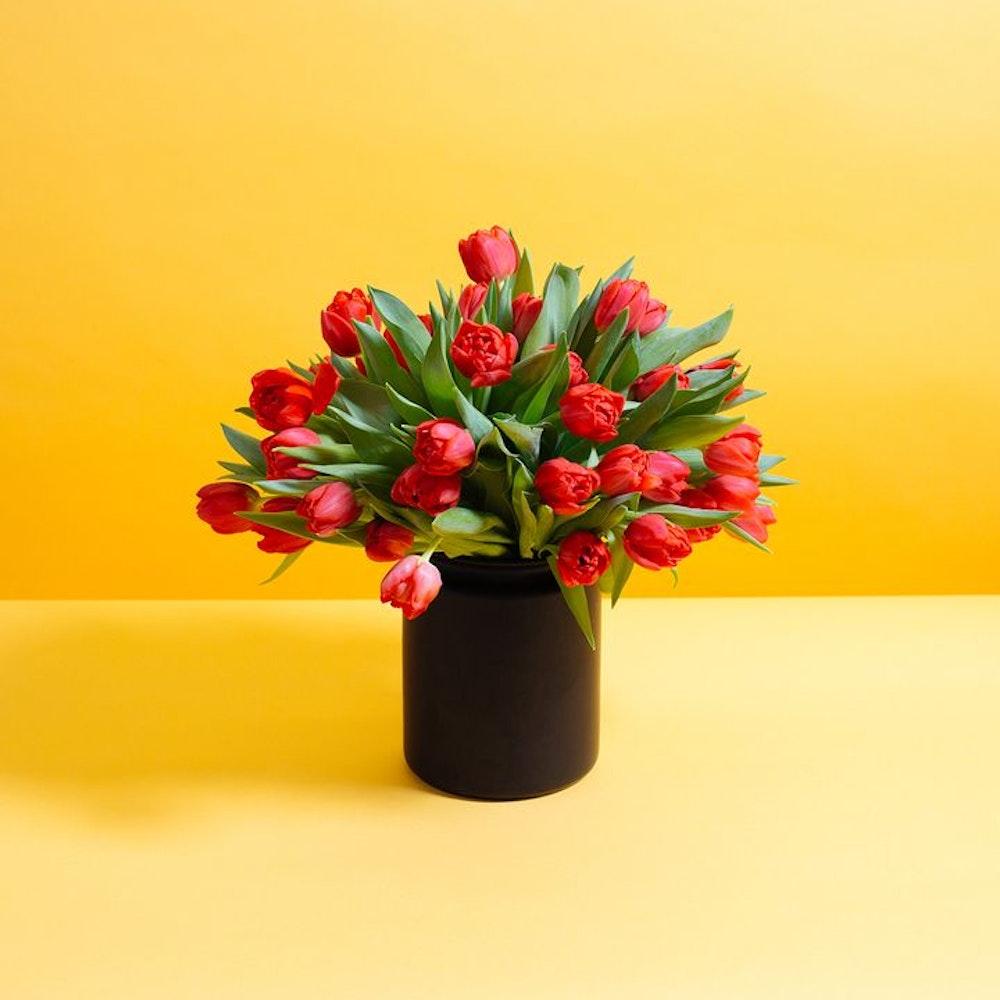 Rouge Princess Tulipa