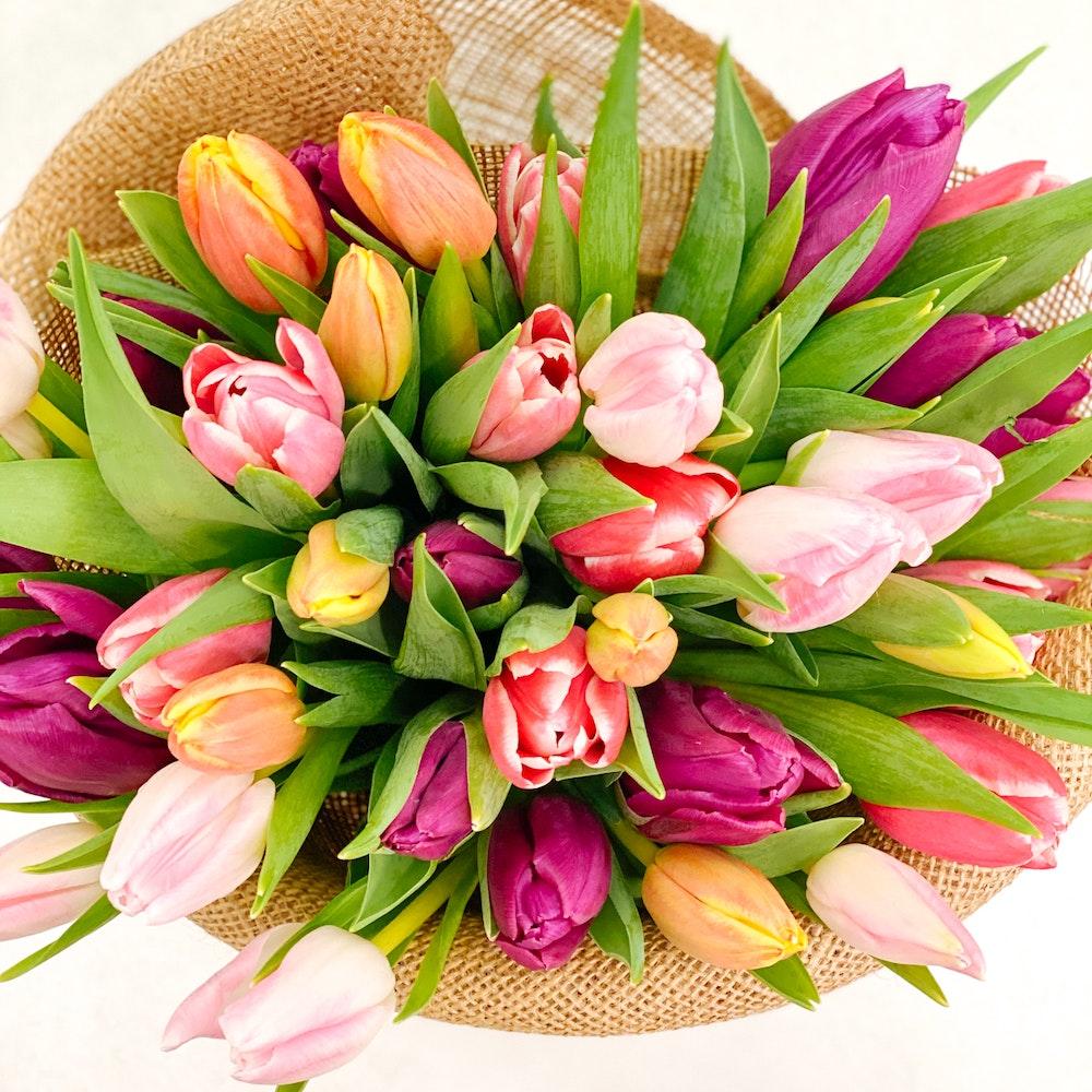 40 Multicolor Tulip
