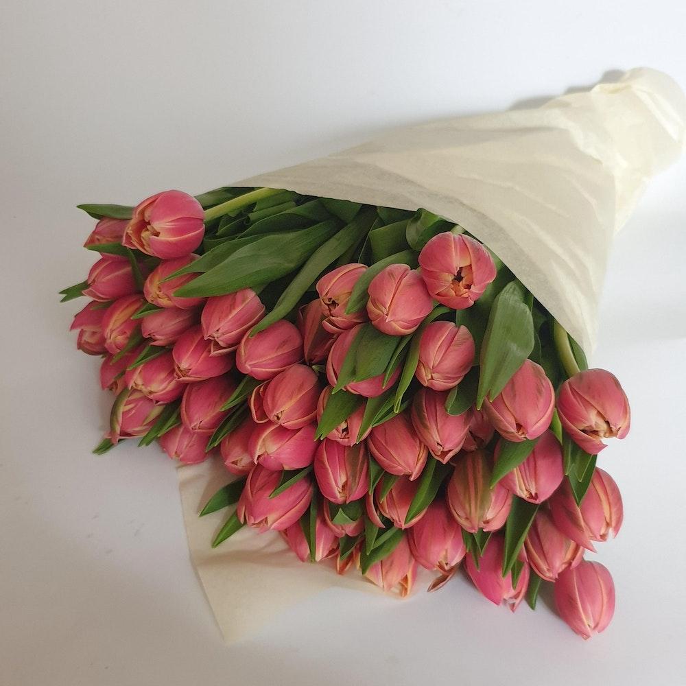 Columbus Double Tulip