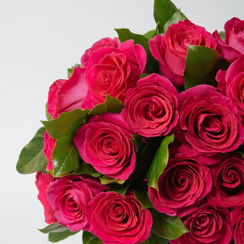 Chicago Pink Roses