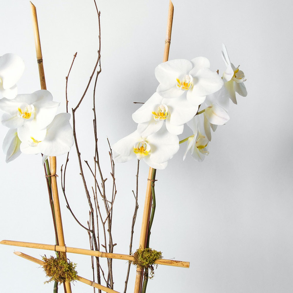 Double-white phalaeonopsis orchid