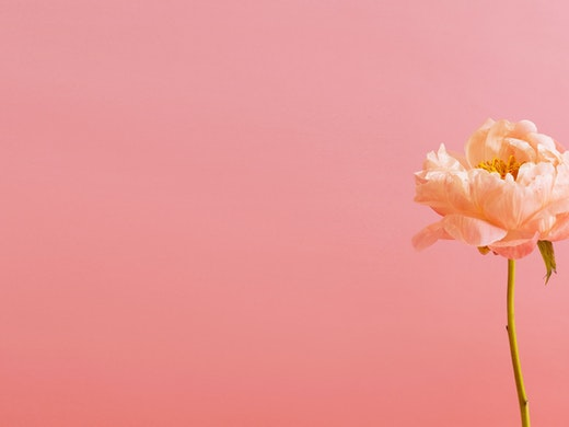 Floom Coral Peony Pink