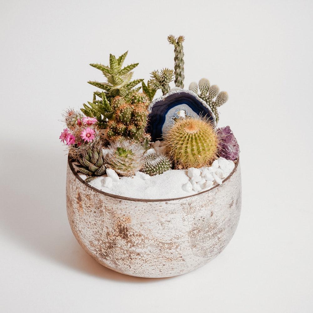 Stylish Cacti