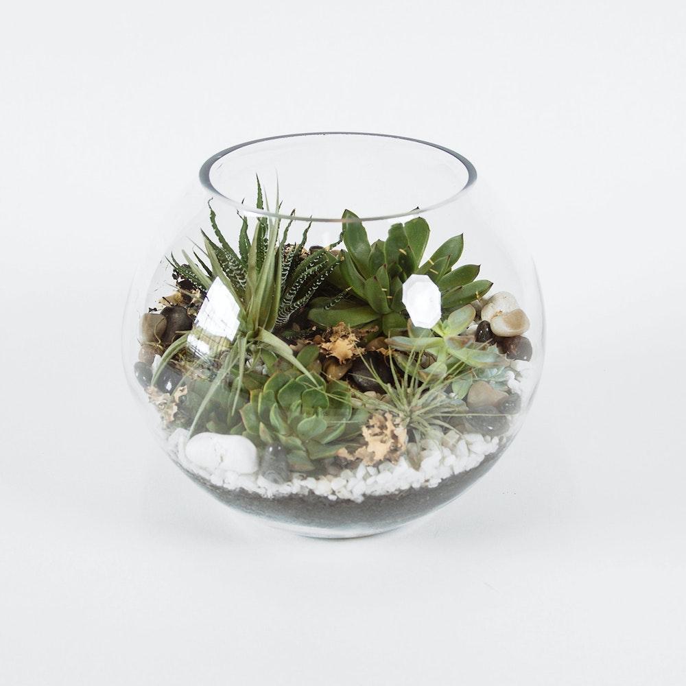 Terrarium Globe